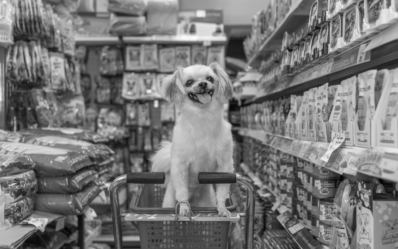 Market Mapping and RocEye<sup>TM</sup> – Deal Origination Support in Pet Foods Market
