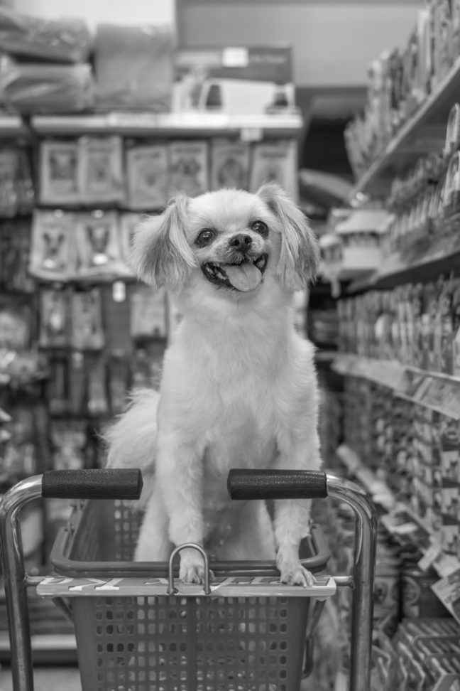 Market Mapping and RocEye – Deal Origination Support in Pet Foods Market